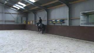 My mare Zamira.
