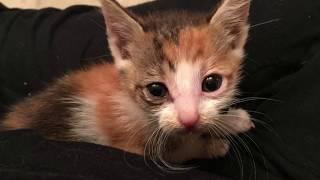 Врач сказал, что котенок не переживет... | Истории от Белочки Бри
