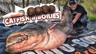 How to catch catfish with Boilies