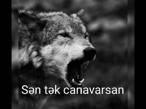 Anar Nagılbaz-qaçış(Sen tek canavarsan)