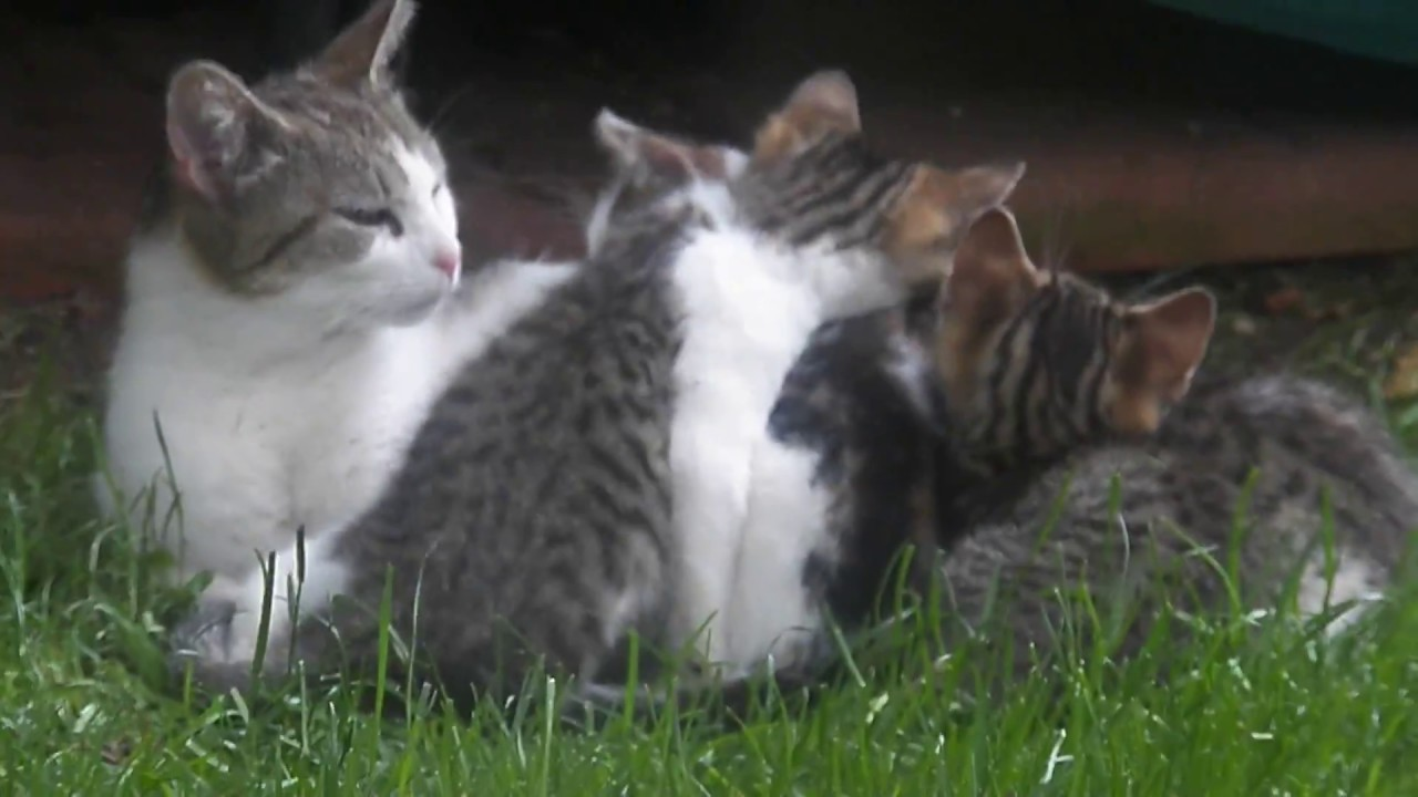 how to keep cat in backyard