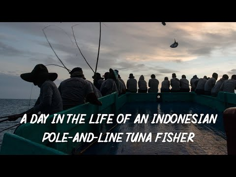 A Day In The Life Of A Pole-and-line Tuna Fisher, Indonesia