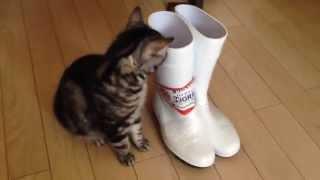 ねこねこ動画TV แมว/ลูกแมว/แมว/un chat/une chatte/Katze/gato/양이 請...