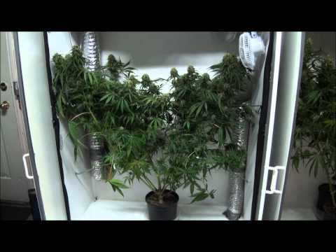 Indoor Closet Grow – Growing Marijuana Indoors