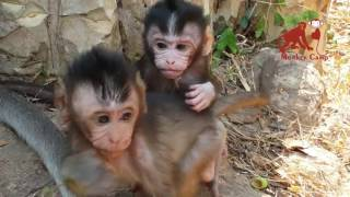 Ultimate Funny Monkey Compilation