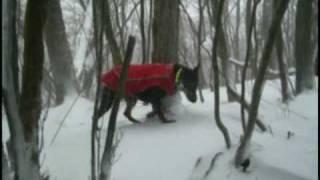 今日の猟は吹雪きで前が見えず猟が出来ませんでした。