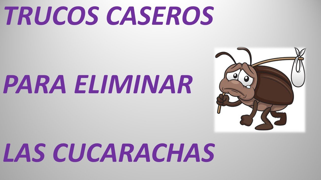 Image gallery exterminar cucarachas - Remedios para eliminar cucarachas ...