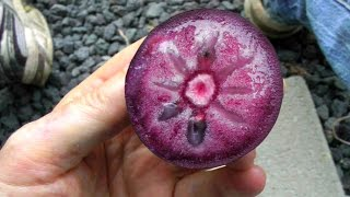 The Star Apple or Caimito Fruit | Video