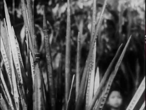 ºº Free Streaming The Pathet Lao, 1966
