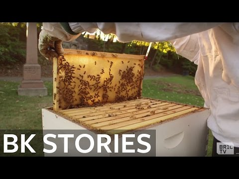 Green-Wood Cemetery Beekeeping is Creating Buzz in Brooklyn | BK Stories