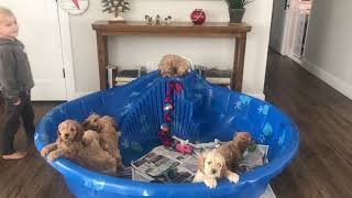 Puppies on the slide
