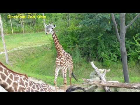 My Road Trip From Stockton California To Lexington Kentucky | USA Travel | Cincinnati Zoo In Ohio