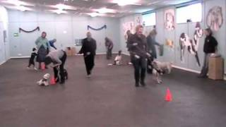 Sussex County Dog Training Xmas Party 2010