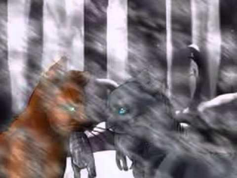 Warrior Cats Mating Fanfiction Bluestar