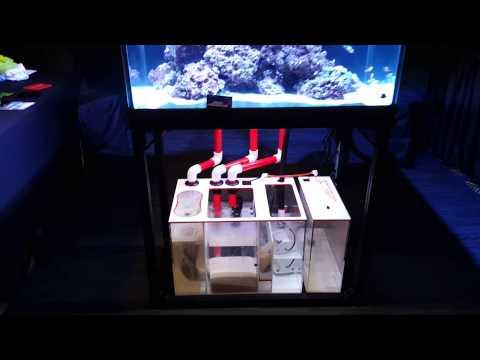 Synergy Reef Overflow MACNA 2015