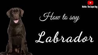 How to pronounce Labrador Retriever | Dog Breed Names