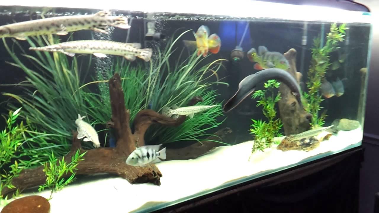400 gallon fish tank