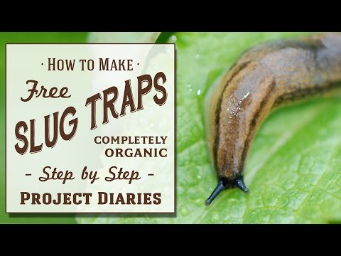 ★ How To: Make Free Slug Traps (A Complete Step By Step Guide)