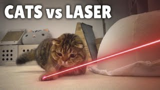 Cats vs Laser | Kittisaurus