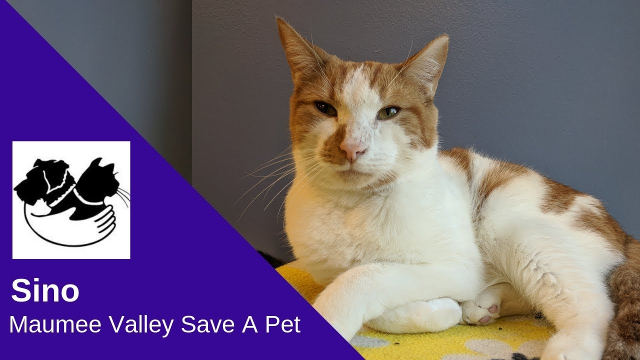 Sino: Maumee Valley Save A Pet