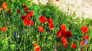 Wildblumenwiese anlegen im 1. Jahr 2015