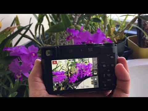 Lumix ZS200 vs LX100 vs FZ1000 Best Travel Camera!