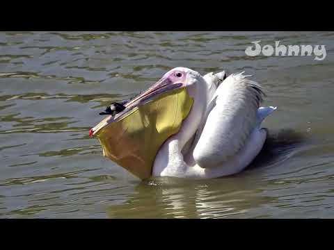 10 Сумасшедших битв животных снятых на камеру людьми / Часть 2