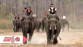 Voi rừng Tây Nguyên: Dũng mãnh - Thân thiện   VTC