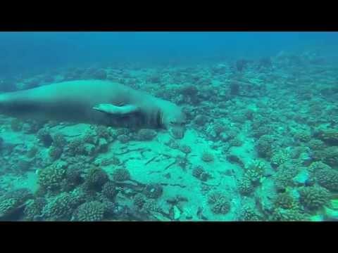 Dive Niihau Bubbles Below Scuba Kauai