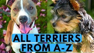Terrier dog breeds list. Two words that describe terrier the best a...