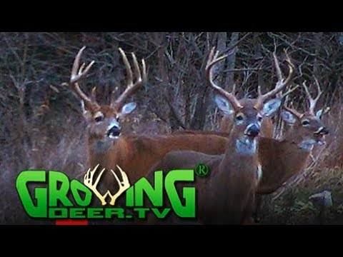 Deer Hunting | Big Buck, Big Story (#425) @GrowingDeer.tv