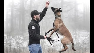 THE BELGIAN MALINOIS - HOW TO TRAIN YOUR PUPPY