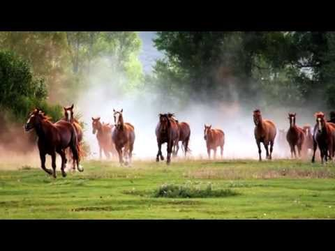 Melveen Leed~Paniolo Country_Lyrics