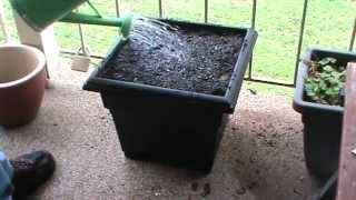 Phil's Gardening Tips And Tricks Container Gardening Is Now Water Efficient Wicker Meets Hugelkultur