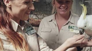 The Currumbin Wildlife Sanctuary in Queensland is a popular place for hugging koalas and feeding kangaroos. Home to more than 1000 animals, the sanctuary ...
