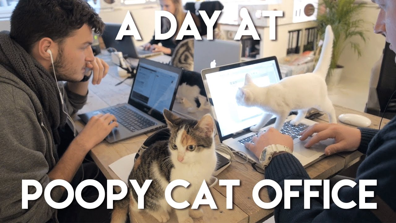 A Day At Poopy Cat Office Youtube
