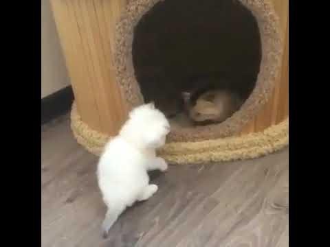 Funny cats playing (милые котята играют)