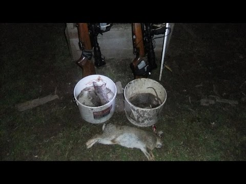 Pest Control with Air Rifles - Rat Shooting - Eye of the Storm