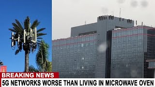 BREAKING: 5G NETWORKS WORSE THAN LIVING IN MICROWAVE OVEN ACCORDING TO NEW RESEARCH
