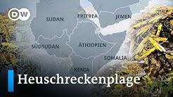 Ostafrika leidet unter schlimmster Heuschreckenplage seit 25 Jahren