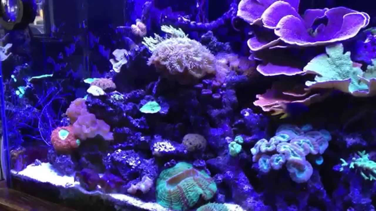 Fish paradise a beautiful lfs in fort worth texas youtube for Fish store fort worth