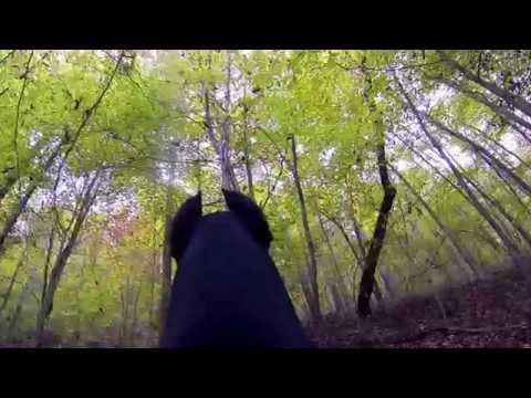 POV of a Doberman Pinscher Running in the Mountains GoPro Hero Mount