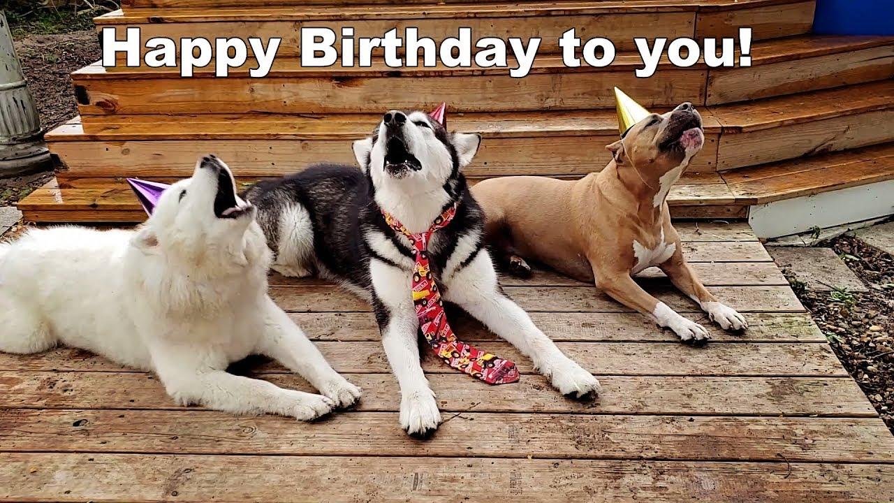 Dogs Singing Happy Birthday Youtube