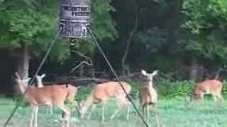 Deer Feeder Tips By Moultrie Feeders