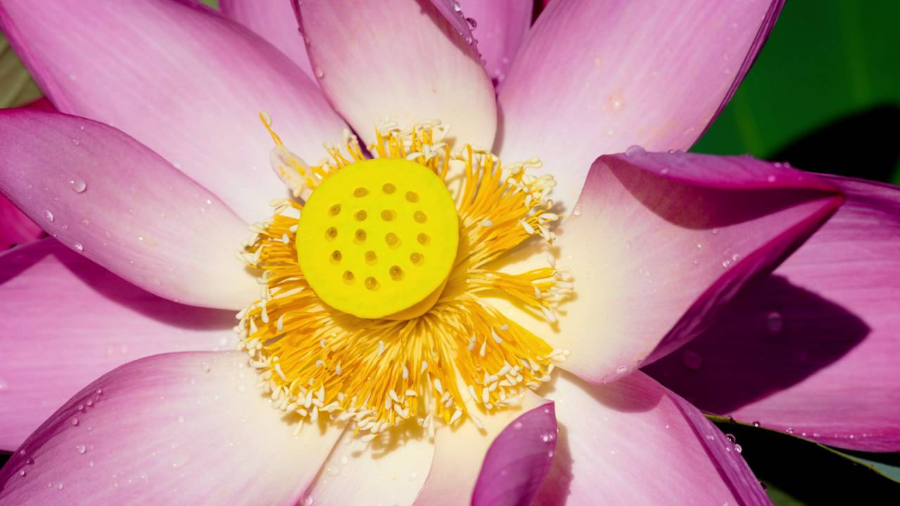 Tara Brach Leads a Guided Meditation: The RAIN of Self Compassion