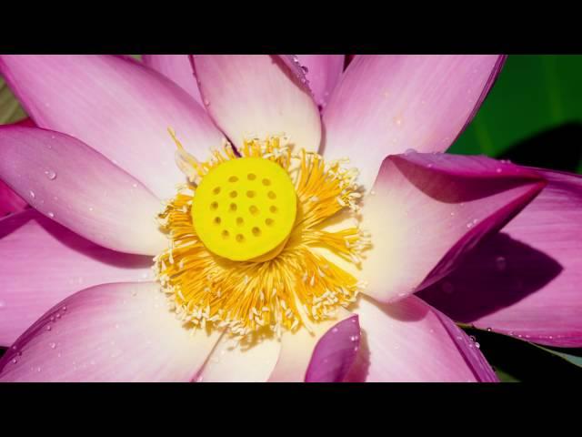 Tara Brach Leads a Guided Meditation: The RAIN of Self Compassion