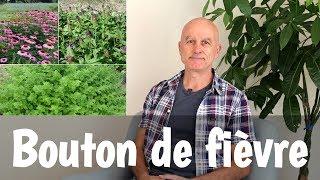 Bouton de fièvre (herpès labial) : quelles plantes utiliser ?