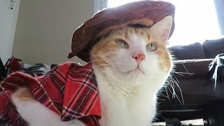 Cute Cat Dresses Up Country