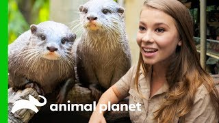 "Two ""Otterly Adorable"" Asian Otters Put On A Show At Australia Zoo 