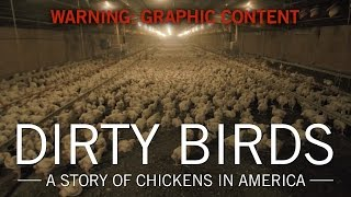 Dirty Birds: A Story of Chickens in America | Original Fare | PBS Food